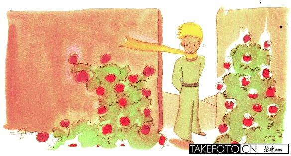 小王子和玫瑰花的原型