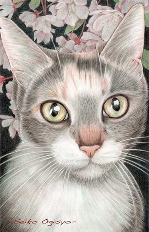 彩铅手绘猫咪:优雅的小眼神