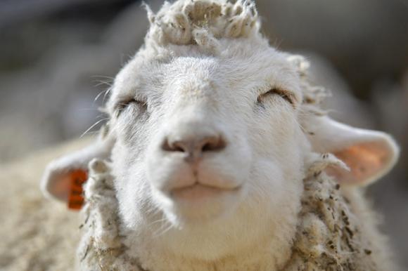 是懒羊羊发型么?_发型设计图片