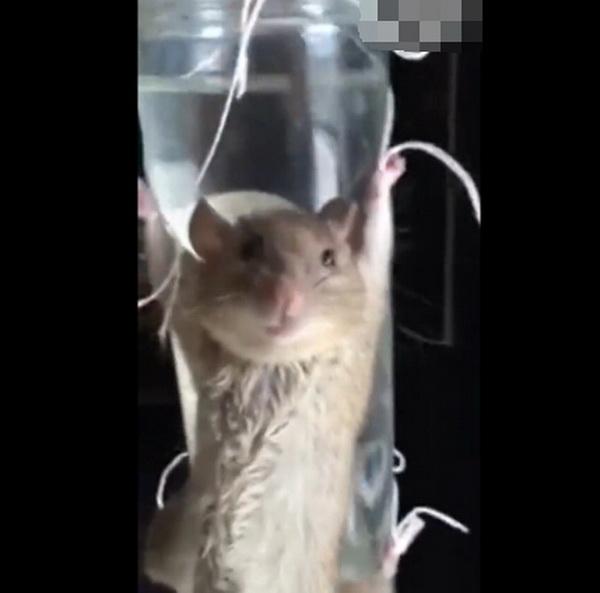 大妈抓老鼠审问 网友表示心疼
