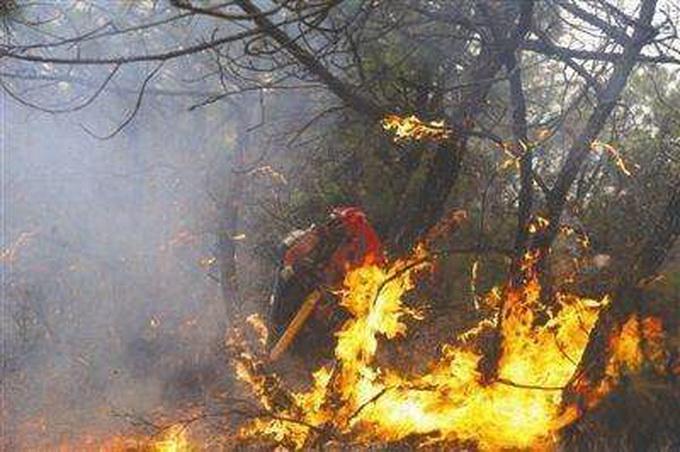上坟抽烟致百亩山林火灾